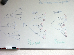 My white board, with decision trees.